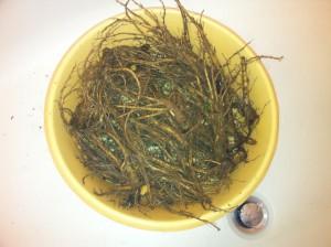 Štětka Soukenická - umývání kořenů