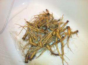 Štětka Soukenická - umývání kořenů 2