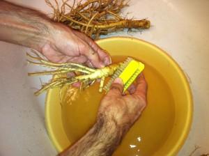 Štětka Soukenická - kartáčování kořenů